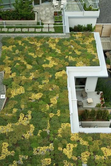 pwl-dockside-green-green-roof