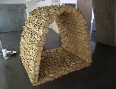 image of mycelium brick development