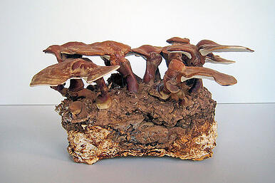Diagram of mycelium brick development