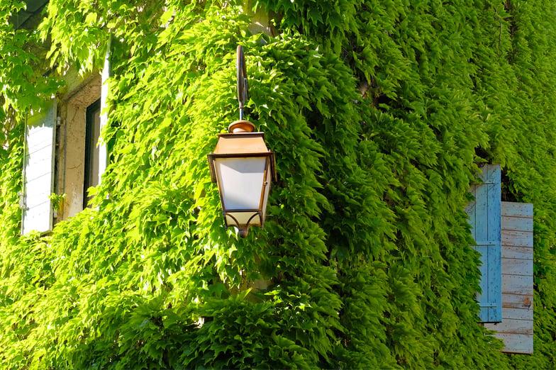 MaxPixel.freegreatpicture.com-Facade-Building-House-Viriginia-Creeper-Ivy-Green-2239863.jpg