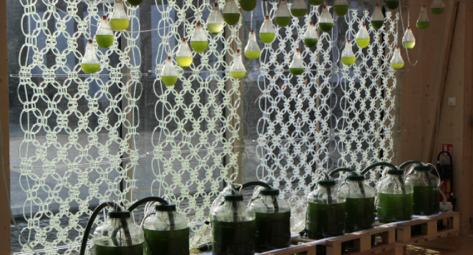 Algae-Powered Innovations for your home
